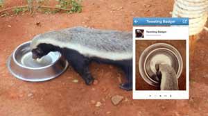 badger-selfie-johannesburg-zoo