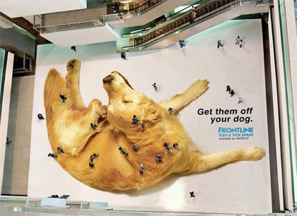 concepto street marketing_dog